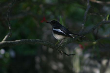 Birding1