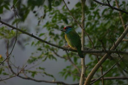 Birding10