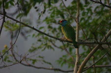 Birding11