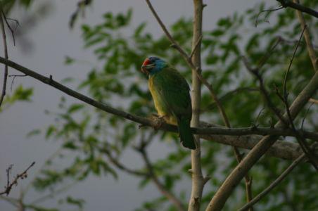 Birding12