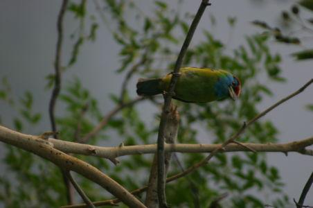 Birding13