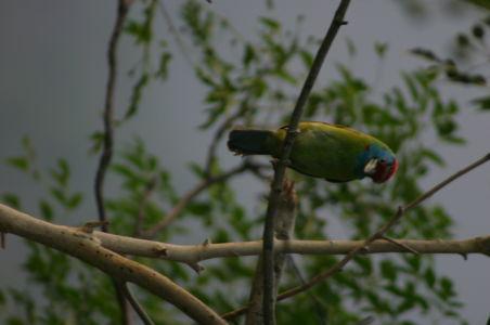 Birding15
