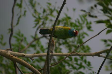 Birding16
