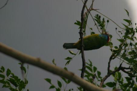 Birding17