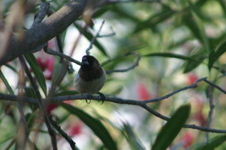 Birding19