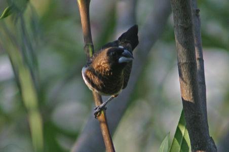 Birding20
