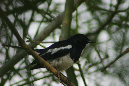 Birding22