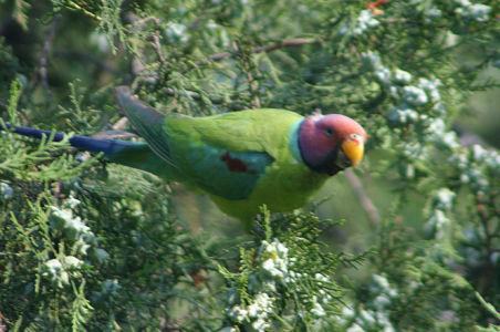 Birding23