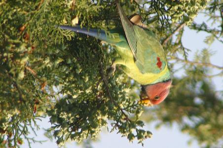 Birding26