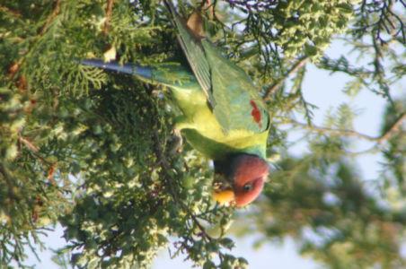 Birding28