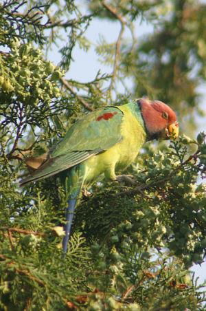 Birding29