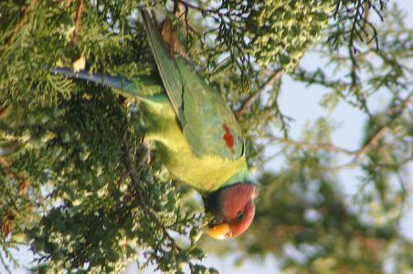 Birding30