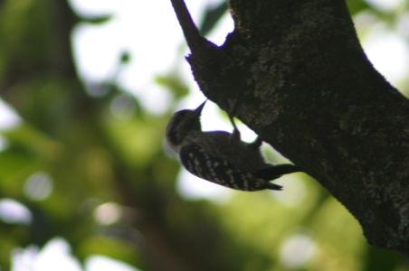 Birding4