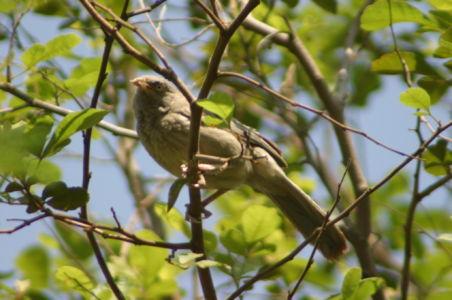 Birding8