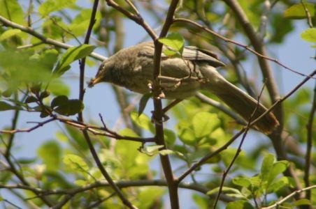 Birding9