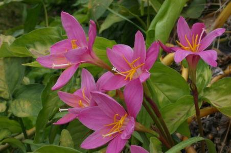 Botanical10