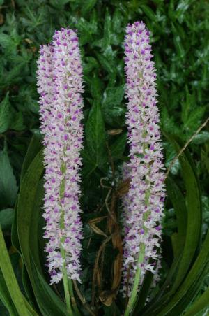 Botanical13