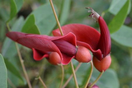 Botanical14