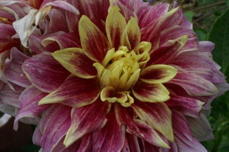Botanical15