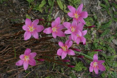 Botanical38