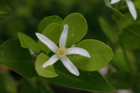 Botanical45