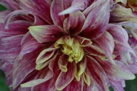 Botanical46