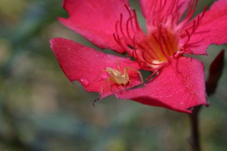 Botanical50