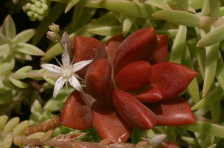 Botanical51