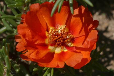 Botanical59