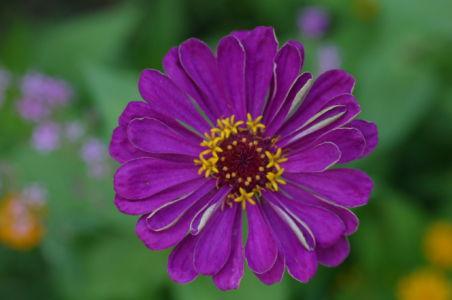 Botanical61