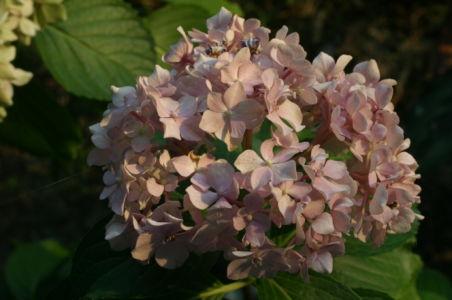Botanical67