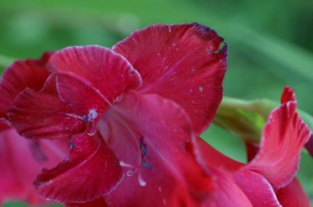 Botanical69