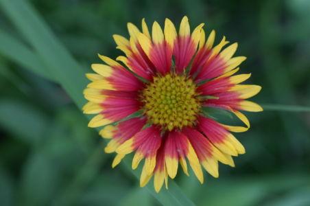 Botanical71