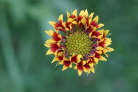 Botanical72