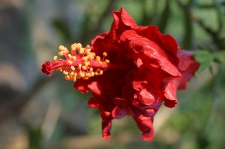 Botanical77