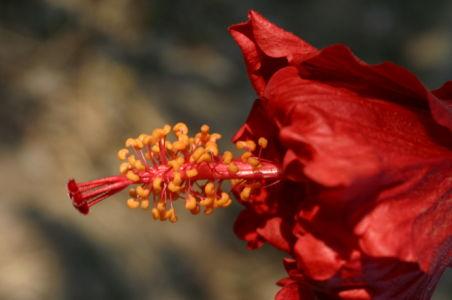 Botanical78