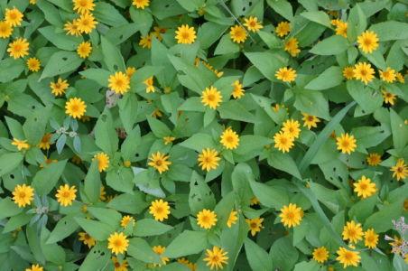 Botanical80