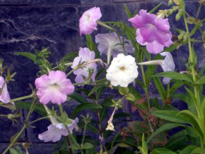 Floral-10