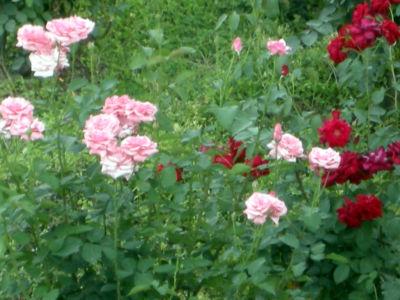 Floral-13