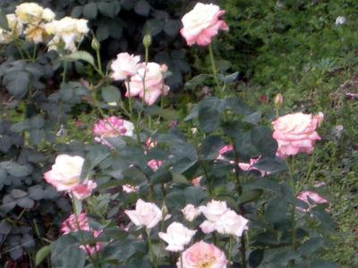 Floral-14