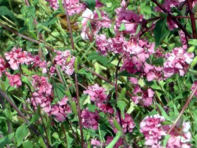 Floral-25