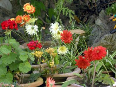 Floral-28