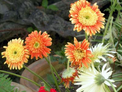 Floral-32