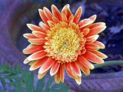 Floral-36