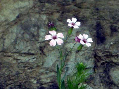 Floral-38