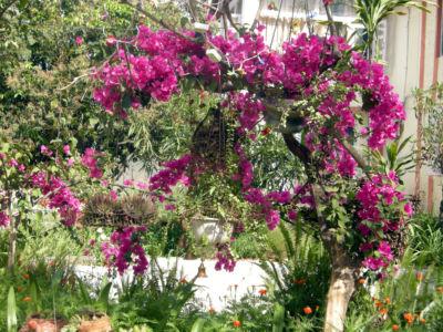 Floral-39